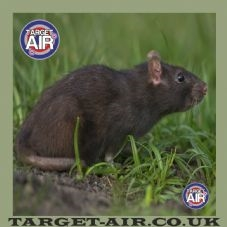 8852_animal-rat-full-colour-airgun-rimfire-shooting-targets-295-pekm227x227ekm
